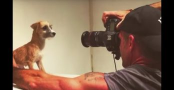 Professional Photographer Does Photo Shoot for Shelter Dogs to Boost Adoption Rates