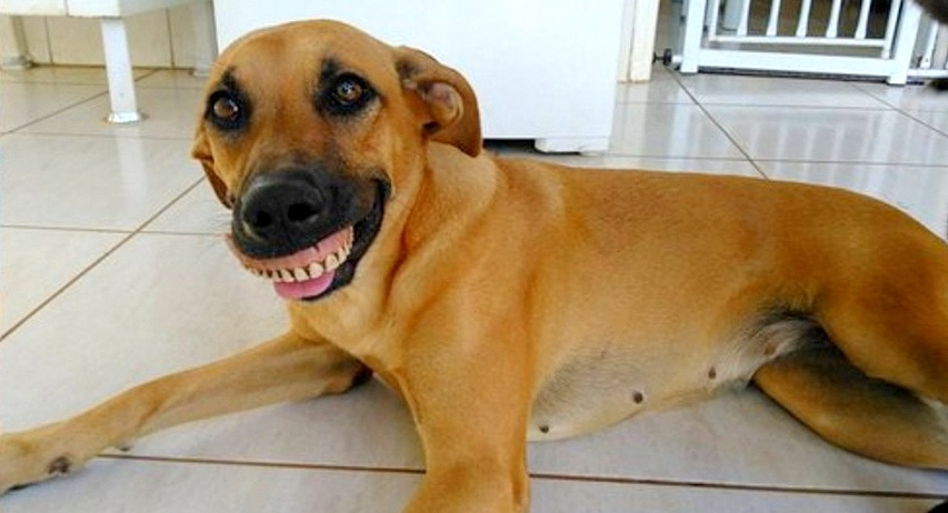 Doofy Dog Can't Stop Smiling After Finding a New Pair of Chompers