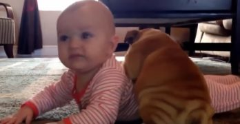 Babies and Bulldogs!  What Could Possibly Be Cuter Than That?!?
