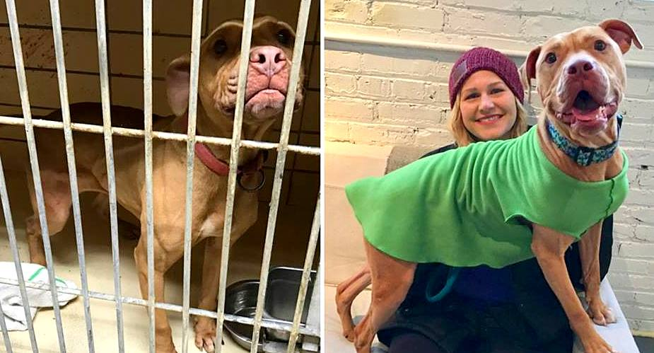 Dog So Happy to Be Rescued That She Split Her Tail Wagging It Has Now Been Adopted!
