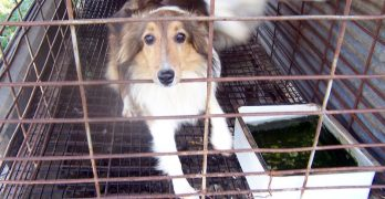 Help Us DEMAND That the USDA Restore Its Puppy Mill Inspection Database!