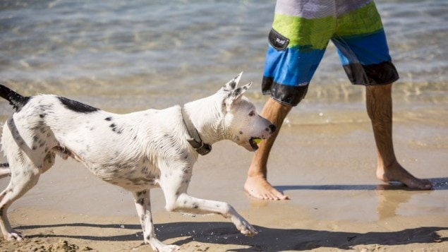 Tel Aviv Aims to Make City More Dog-Friendly With New, High-Tech Effort