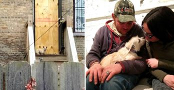 Critically Ill Abandoned Dog Who Refused to Leave Her Old Home Now Has a Loving New One