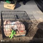 Abandoned! Cops Find Crated Dog Roadside with Food, Toys & Blanket