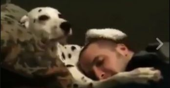 Sweet Dalmatian Loves On His Hooman <3