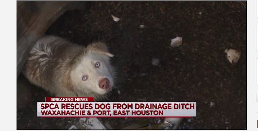 Marine & SPCA Crew Rescue Abandoned Dog From Drain