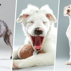 Special-Needs Pups Will Feature Big in This Year's Puppy Bowl!