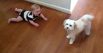 Barking, Dancing Dog is the Funniest Thing This Baby Has Ever Seen!