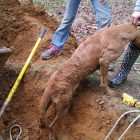 Tiny Heroes! Kids Help Rescue Squad Save Dog From Drain Pipe