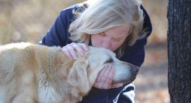 #bestlastdays: Old Dog Rescued From a Puddle Knew Great Love Before He Died