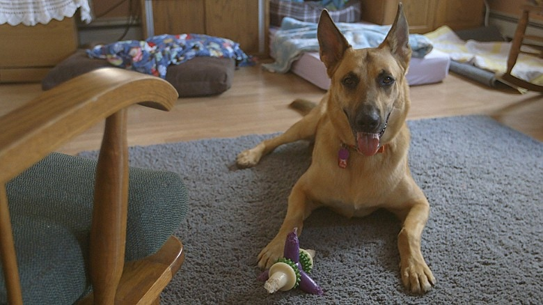 SCIENCE SAVES. DNA Keeps Innocent Dog Off Death Row