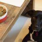 Dine With Your Dog & Ollie Pet Food Will Donate to Shelters!