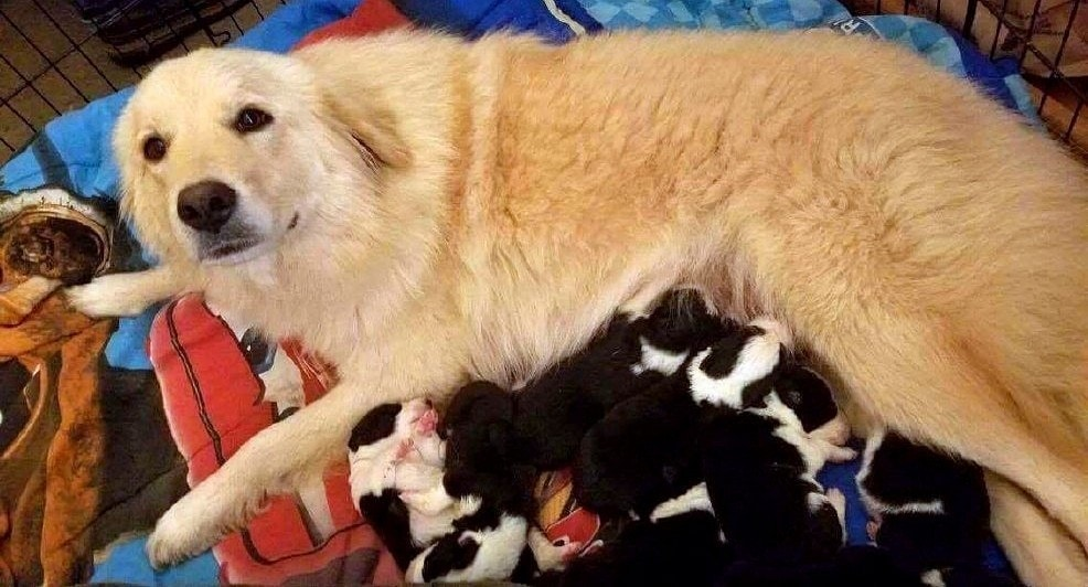 Mother Dog Who Lost Puppies in a Barn Fire Adopts Orphan Puppies