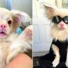 Adorable Albino Puppy Survives Against All Odds, and Now Has the Shades to Prove His Badassery