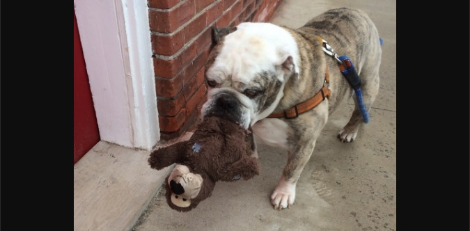 Winston Cannot Go Anywhere Without His Stuffed Toys!