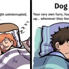 Dog Lover VS. Dog Parent, Which One Are You?