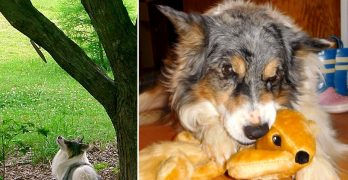 Dog Has Spent His Whole Life Trying to Catch a Squirrel, So His Mom Finally Got One for Him