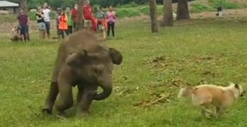 Dog and Baby Elephant Play Silly Games Together