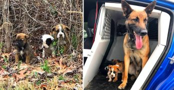 K-9 Comforts Three Small, Abandoned Puppies He Helped Rescue