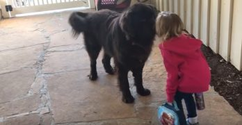 A Little Girl Gives Her Dog Pecks on the Nose, and He Actually Pecks Back