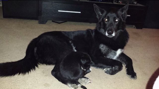 DNA Test Proves Family Dog Is NOT a Wolf Hybrid, Gets to Stay With Family