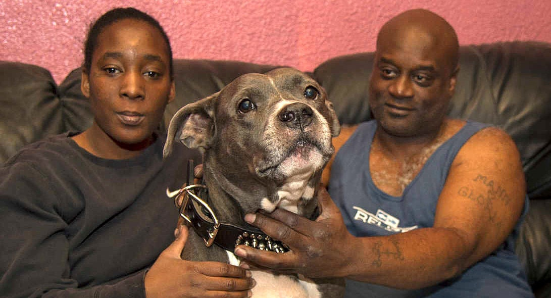 Heroic Rescue Pit Bull Takes a Bullet to Save His Family from an Armed Intruder