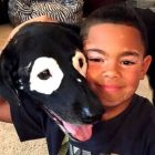 Dog Famous for Having Vitiligo Has Helped a Little Boy With the Same Condition Love His Skin