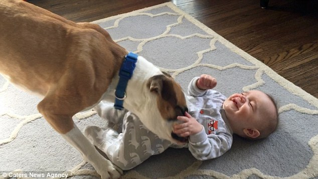 Sometimes, Dogs Make the Best Big Brothers in the World