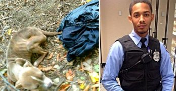 Police Officer Arrested for Dumping His Emaciated Dog in a Trash Bag