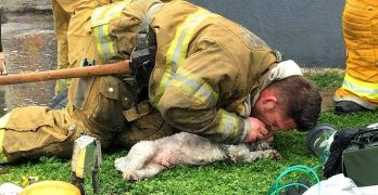 Firefighters Valiantly Resuscitate a Tiny Dog Who Died in a Fire