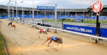 The Last Greyhound Racetrack in London Has Closed Its Doors for Good