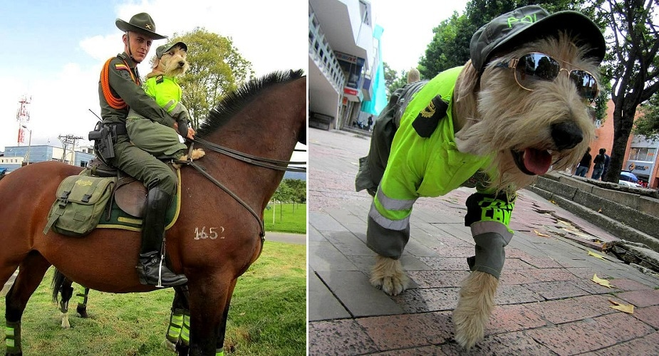 Injured Street Dog Becomes Colombia's Cutest Police Officer
