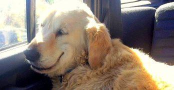 Drugged Doggo's Smile Is Sure to Make You Smile, Too