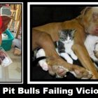Vicious Pit Bulls Failing Viciousness