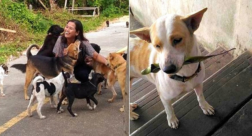 Street Dog Always Brings a Present to the Woman Who Feeds Him