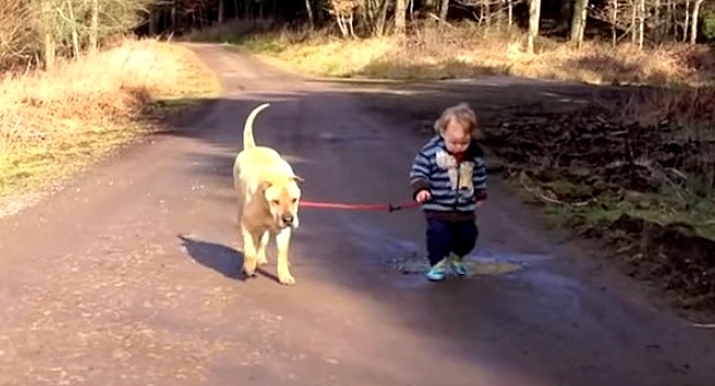 Two-Year-Old Took His Dog for a Walk Like a Big Boy, but Forgot to Tell Anyone He Was Going