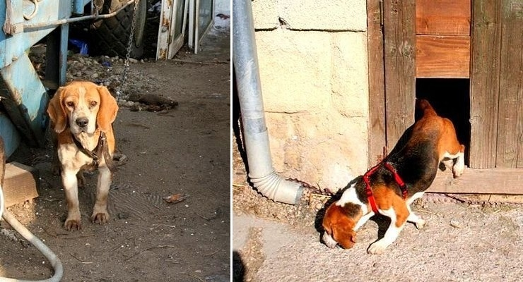 Dog Who Lived on a Chain for 6 Years Without Shelter Can't Stop Sniffing Her Way Through Life