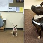 North Carolina's Newest K-9s Are Rescue Pit Bulls