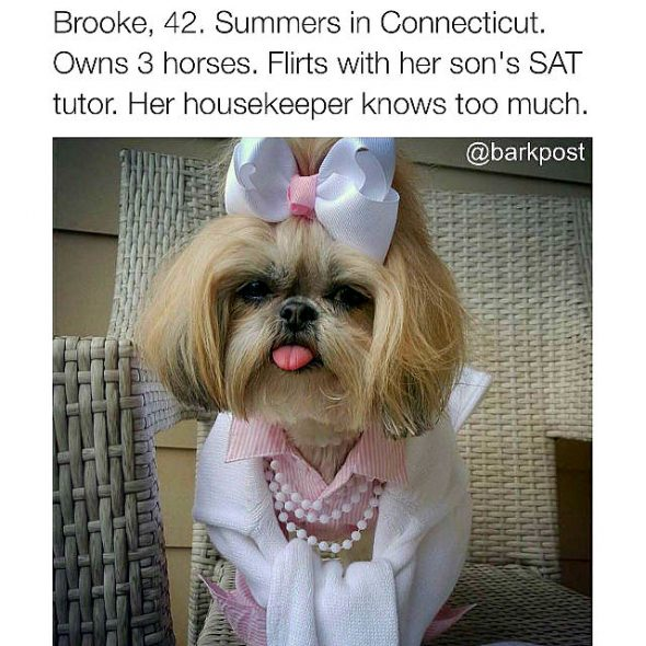 41 Dog Bios That Will Definitely Remind You Of Someone You Know
