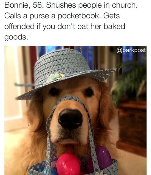 Funny Dog Rescue Bios