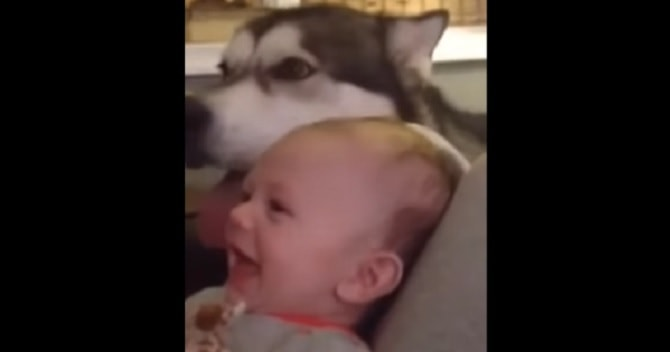 Howling Floof Blows Little Baby's Mind