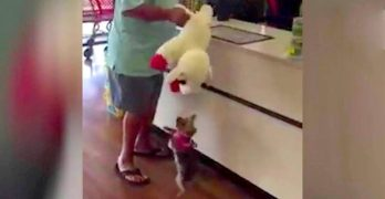 A Video of Little Lucy and the GIANT Toy She Picked Out Herself Is Taking the Internet by Storm