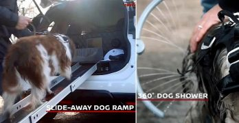 This Insanely Dog-Friendly Nissan Puts Subaru to Shame!
