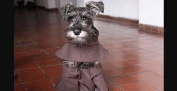 Stray Dog Finds Calling in Franciscan Monastery in Bolivia