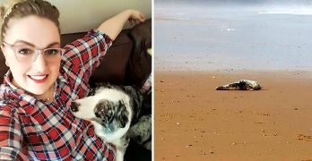 Woman and Her Dog Save a Seal Pup from Being Tortured by Thugs