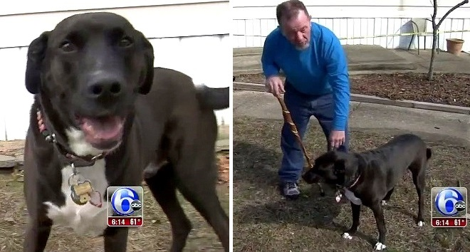 Rescue Dog Repays the Kindness by Saving His Disabled Owner from a Deadly Fire