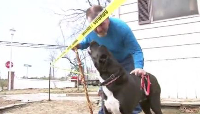 Man Says Shelter Dog Paid It Forward, Saved Him From House Fire