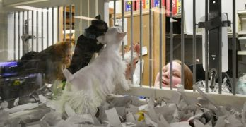 Roseville Bans The Sale of Dogs & Cats in Pet Stores