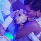 Groom Surprises Bride With The Cuddliest Wedding Gift Ever!