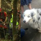 Missing Hiker Found After Two Days; Dog Stayed By Her Side The Entire Time